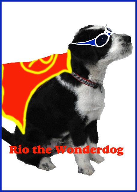 Rio the Wonderdog-web