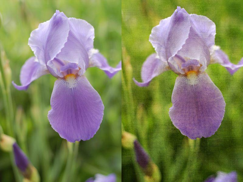 Iris BA